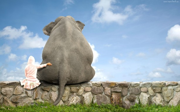 Elephant-Friend